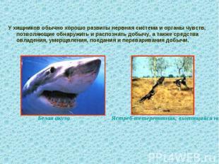 У хищников обычно хорошо развиты нервная система и органы чувств, позволяющие об