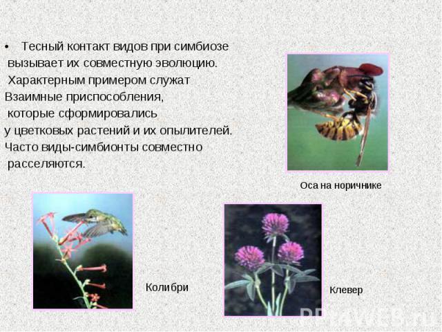 Тесный контакт видов при симбиозе вызывает их совместную эволюцию. Характерным примером служат Взаимные приспособления, которые сформировались у цветковых растений и их опылителей. Часто виды-симбионты совместно расселяются.