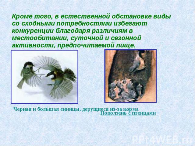 Кроме того, в естественной обстановке виды со сходными потребностями избегают конкуренции благодаря различиям в местообитании, суточной и сезонной активности, предпочитаемой пище. Черная и большая синицы, дерущиеся из-за корма Поползень с птенцами