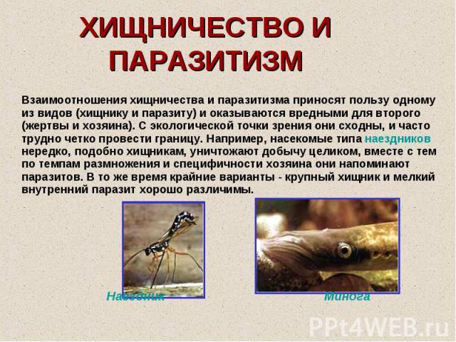 ХИЩНИЧЕСТВО И ПАРАЗИТИЗМ Взаимоотношения хищничества и паразитизма приносят пользу одному из видов (хищнику и паразиту) и оказываются вредными для второго (жертвы и хозяина). С экологической точки зрения они сходны, и часто трудно четко провести гра…