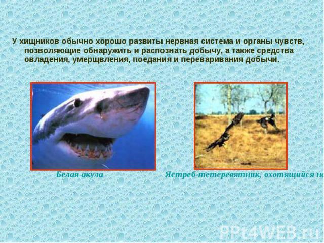 У хищников обычно хорошо развиты нервная система и органы чувств, позволяющие обнаружить и распознать добычу, а также средства овладения, умерщвления, поедания и переваривания добычи.