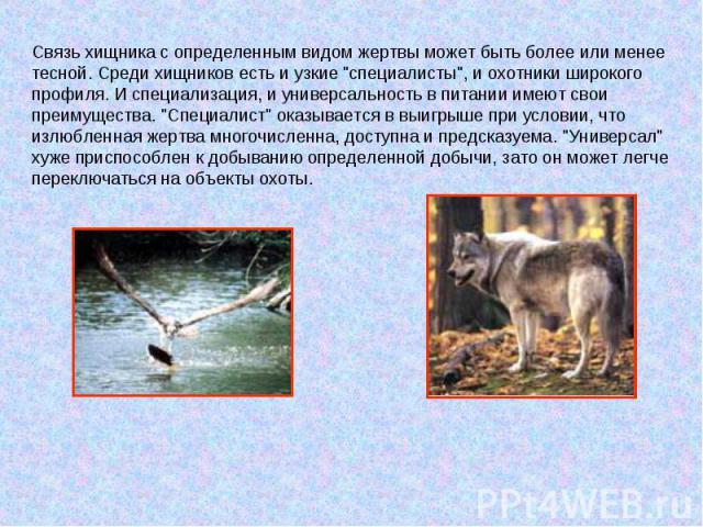 Связь хищника с определенным видом жертвы может быть более или менее тесной. Среди хищников есть и узкие