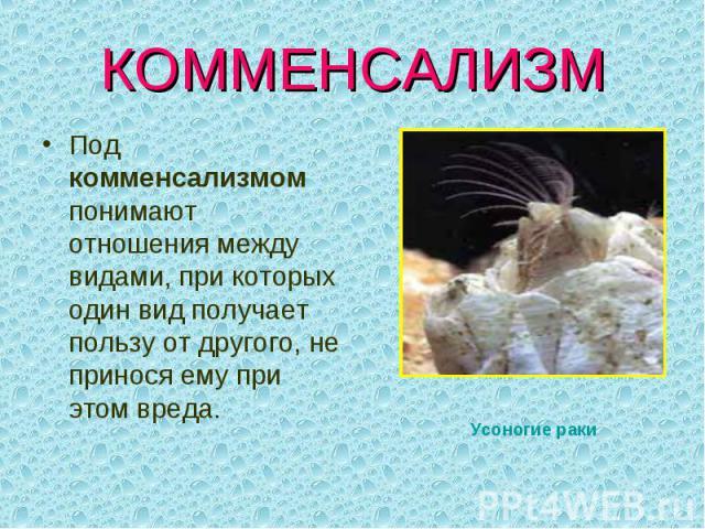 КОММЕНСАЛИЗМ Под комменсализмом понимают отношения между видами, при которых один вид получает пользу от другого, не принося ему при этом вреда. Усоногие раки