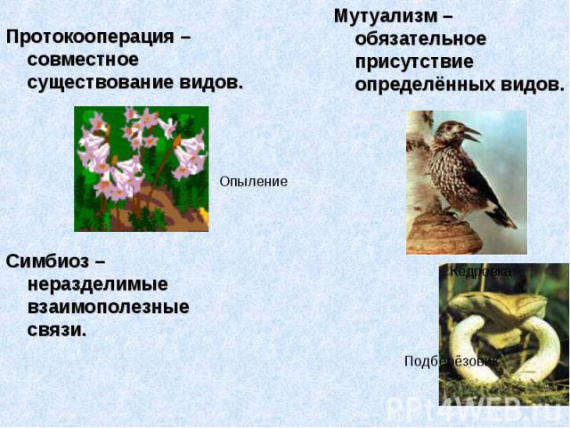Протокооперация – совместное существование видов. Мутуализм – обязательное присутствие определённых видов. Симбиоз – неразделимые взаимополезные связи.