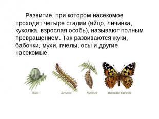 Развитие, при котором насекомое проходит четыре стадии (яйцо, личинка, куколка,