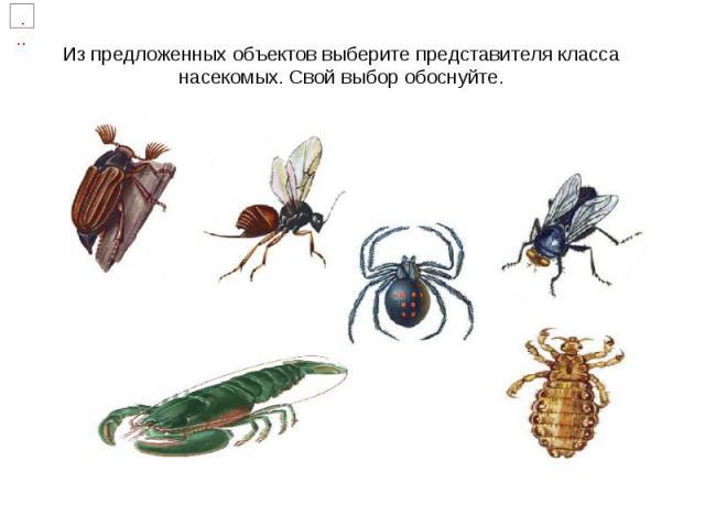 Из предложенных объектов выберите представителя класса насекомых. Свой выбор обоснуйте.