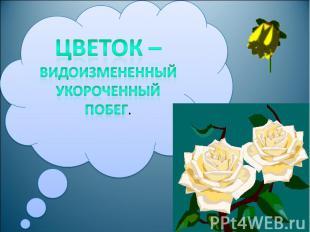 Цветок – видоизмененный укороченный побег.