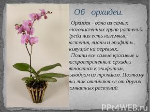 Об орхидеи. Орхидея - одна из самых многочисленных групп растений. Среди них ест