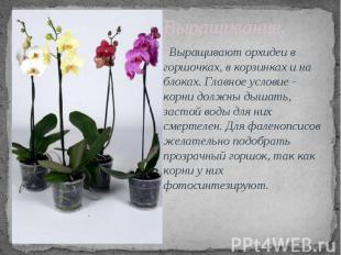 Выращивание. Выращивают орхидеи в горшочках, в корзинках и на блоках. Главное ус