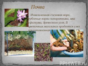 Почва Измельченная сосновая кора, рубленые корни папоротника, мха сфагнума, древ