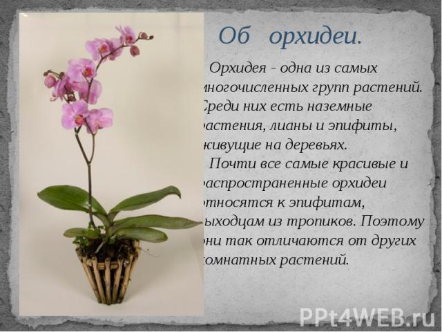 Об орхидеи. Орхидея - одна из самых многочисленных групп растений. Среди них есть наземные растения, лианы и эпифиты, живущие на деревьях. Почти все самые красивые и распространенные орхидеи относятся к эпифитам, выходцам из тропиков. Поэтому они та…
