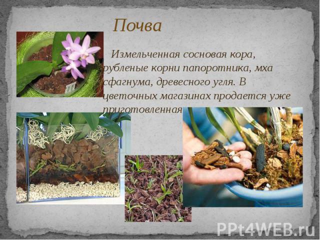 Почва Измельченная сосновая кора, рубленые корни папоротника, мха сфагнума, древесного угля. В цветочных магазинах продается уже приготовленная почвенная смесь.