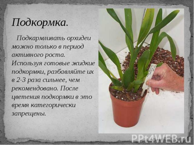 Подкормка. Подкармливать орхидеи можно только в период активного роста. Используя готовые жидкие подкормки, разбавляйте их в 2-3 раза сильнее, чем рекомендовано. После цветения подкормки в это время категорически запрещены.