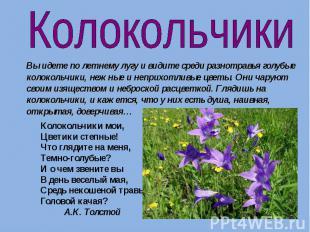 Колокольчики Вы идете по летнему лугу и видите среди разнотравья голубые колокол