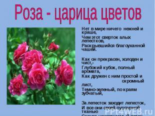Роза - царица цветов Нет в мире ничего нежней и краше, Чем этот сверток алых леп