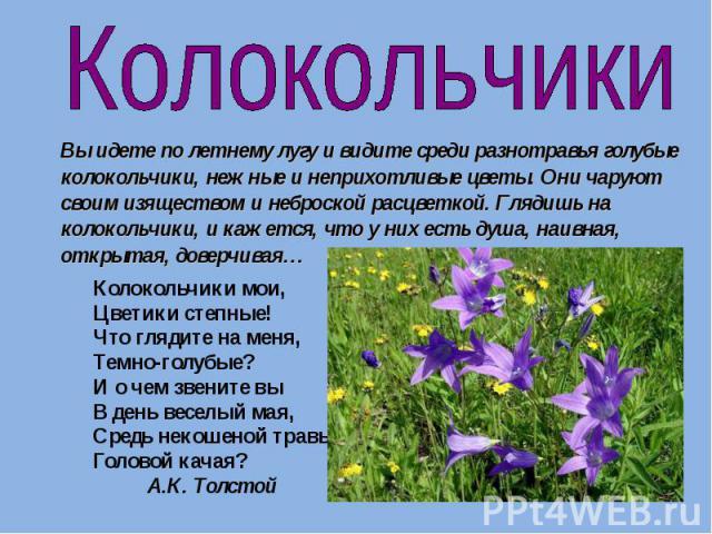 Колокольчики Вы идете по летнему лугу и видите среди разнотравья голубые колокольчики, нежные и неприхотливые цветы. Они чаруют своим изяществом и неброской расцветкой. Глядишь на колокольчики, и кажется, что у них есть душа, наивная, открытая, дове…