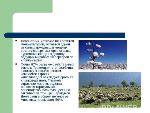 Хлопчатник, хотя уже не является монокультурой, остаётся одной из самых доходных и мощных составляющих экспорта страны. Туркмения входит в десятку ведущих мировых экспортёров по хлопку-сырцу. Почти 97% сельскохозяйственных земель Туркмении- это паст…