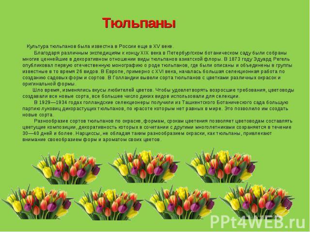 Тюльпаны Культура тюльпанов была известна в России еще в XV веке.  Благодаря различным экспедициям к концу XIX века в Петербургском ботаническом саду были собраны многие ценнейшие в декоративном отношении виды тюльпанов азиатской флоры. В 1873 …