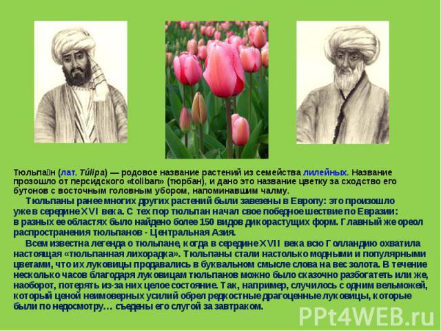 Тюльпа н (лат.Túlipa) — родовое название растений из семейства лилейных. Название прозошло от персидского «toliban» (тюрбан), и дано это название цветку за сходство его бутонов с восточным головным убором, напоминавшим чалму. Тюльпаны ранее многих …