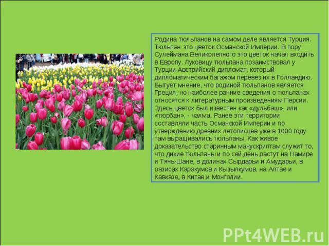 Родина тюльпанов на самом деле является Турция. Тюльпан это цветок Османской Империи. В пору Сулеймана Великолепного это цветок начал входить в Европу. Луковицу тюльпана позаимствовал у Турции Австрийский дипломат, который дипломатическим багажом пе…