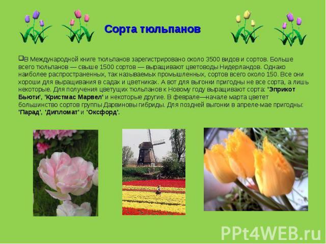 Сорта тюльпанов В Международной книге тюльпанов зарегистрировано около 3500 видов и сортов. Больше всего тюльпанов — свыше 1500 сортов — выращивают цветоводы Нидерландов. Однако наиболее распространенных, так называемых промышленных, сортов всего ок…