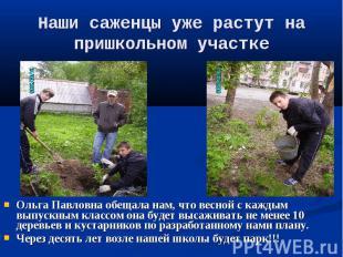 Наши саженцы уже растут на пришкольном участке Ольга Павловна обещала нам, что в