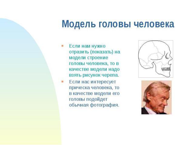 Модель головы человека Если нам нужно отразить (показать) на модели строение головы человека, то в качестве модели надо взять рисунок черепа. Если нас интересует прическа человека, то в качестве модели его головы подойдет обычная фотография.