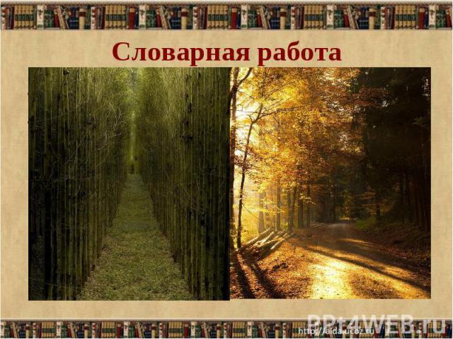 Просеки лесных дорог… Просеки лесных дорог… Просека - полоса, узкая дорога, прорубленная в лесу.