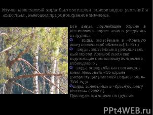 Все виды, подлежащие охране в Мешковском овраге можно разделить на группы: виды,