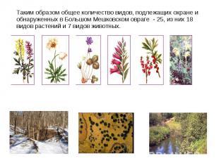 Таким образом общее количество видов, подлежащих охране и обнаруженных в Большом