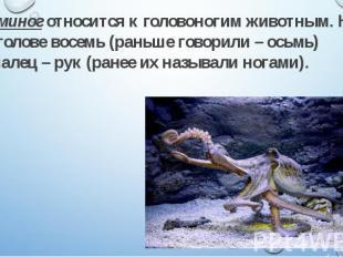 Осьминог относится к головоногим животным. На его голове восемь (раньше говорили