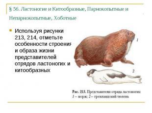 §56. Ластоногие и Китообразные, Парнокопытные и Непарнокопытные, Хоботные Испол