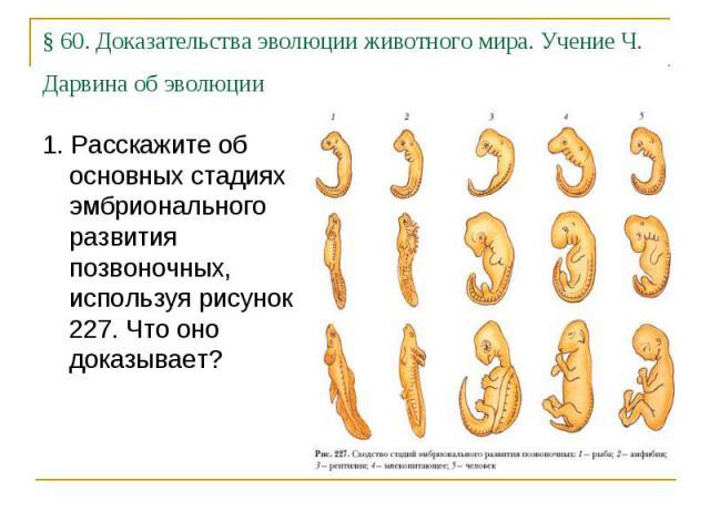 §60. Доказательства эволюции животного мира. Учение Ч. Дарвина об эволюции 1. Расскажите об основных стадиях эмбрионального развития позвоночных, используя рисунок 227. Что оно доказывает?