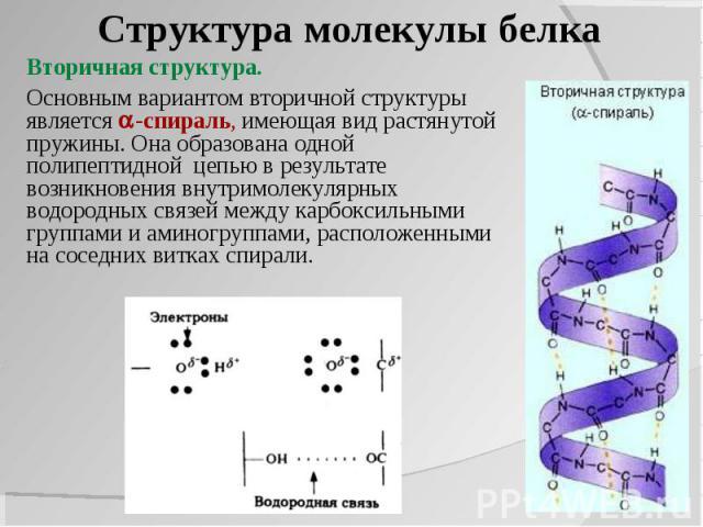 какие св¤зи представлены в первичной структуре