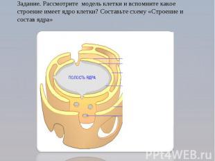 Задание. Рассмотрите модель клетки и вспомните какое строение имеет ядро клетки?