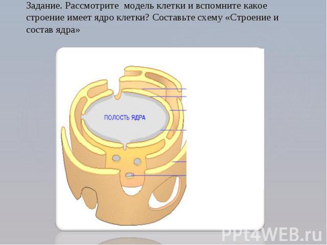 Задание. Рассмотрите модель клетки и вспомните какое строение имеет ядро клетки? Составьте схему «Строение и состав ядра»