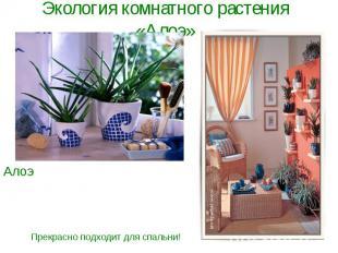 Экология комнатного растения «Алоэ»Алоэ - хорошая защита от негативной энергии.