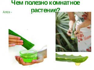 Чем полезно комнатное растение?Алоэ - находит свое применение в гомеопатии (забо