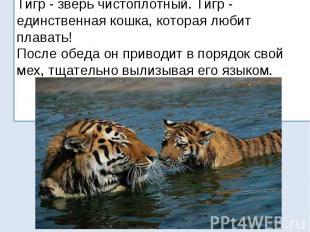 Тигр - зверь чистоплотный. Тигр - единственная кошка, которая любит плавать! Пос