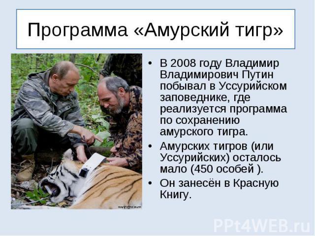 Программа «Амурский тигр» В 2008 году Владимир Владимирович Путин побывал в Уссурийском заповеднике, где реализуется программа по сохранению амурского тигра. Амурских тигров (или Уссурийских) осталось мало (450 особей ). Он занесён в Красную Книгу.