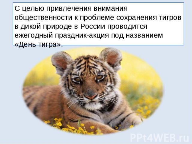 С целью привлечения внимания общественности к проблеме сохранения тигров в дикой природе в России проводится ежегодный праздник-акция под названием «День тигра».
