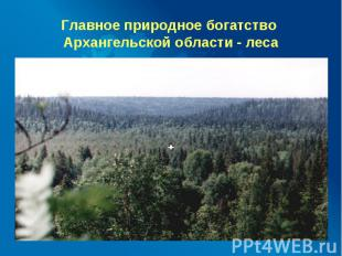 Главное природное богатство Архангельской области - леса