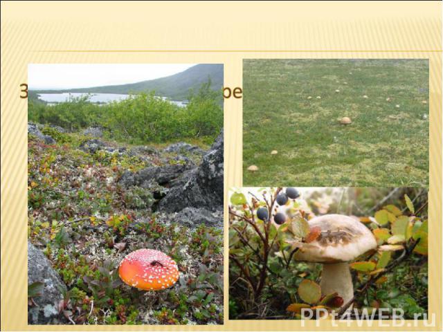 Здесь грибы выше деревьев