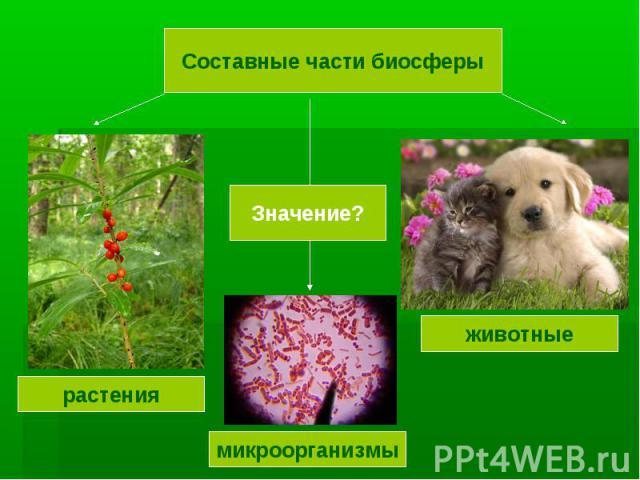 Составные части биосферы Значение? растения микроорганизмы животные