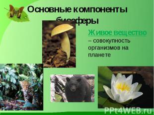 Основные компоненты биосферы Живое вещество – совокупность организмов на планете