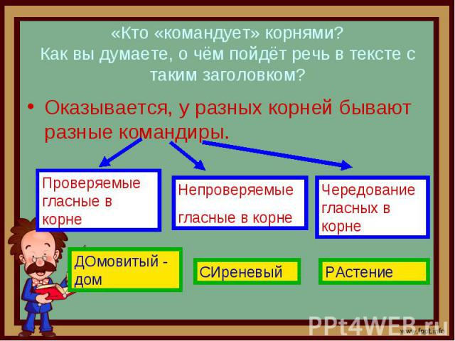 «Кто «командует» корнями? Как вы думаете, о чём пойдёт речь в тексте с таким заголовком? Оказывается, у разных корней бывают разные командиры.