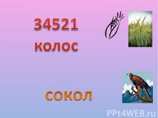 34521 колос сокол