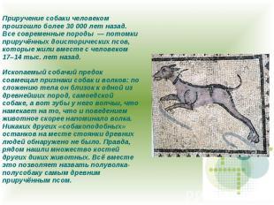 Приручение собаки человеком произошло более 30 000 лет назад. Все современные по