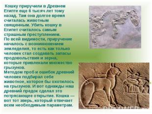 Кошку приручили в Древнем Египте еще 6 тысяч лет тому назад. Там она долгое врем