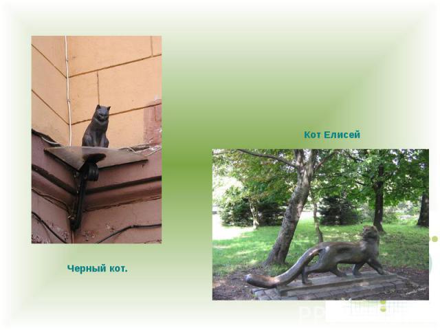 Черный кот. Кот Елисей